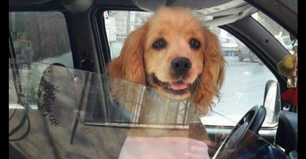 Kaybolan köpeğini her yerde arıyor