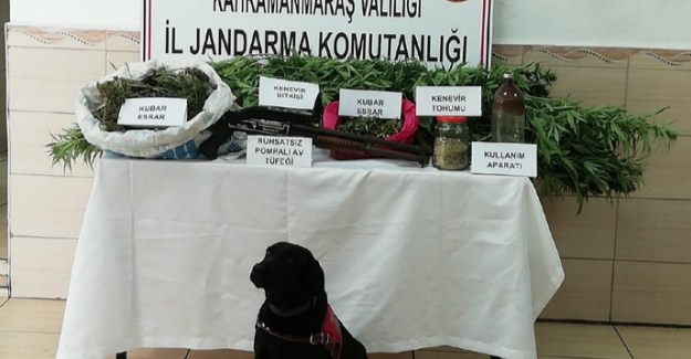 Elbistan'da uyuşturucu operasyonu: 1 kişi tutuklandı