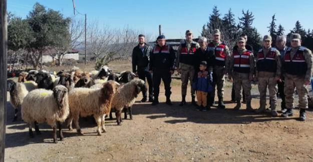 Jandarma hayvan hırsızlarını yakaladı