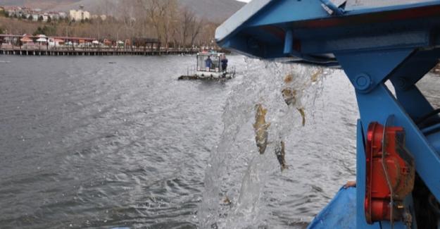 Pınarbaşı'na anaç balık bırakıldı