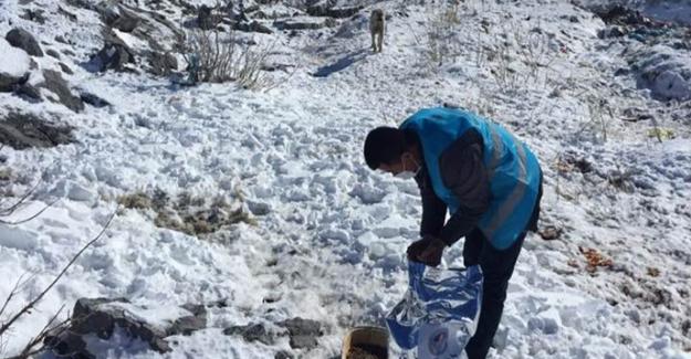 Nurhak Belediyesi'nden 'Bir kap su bir kap mama' çağrısı