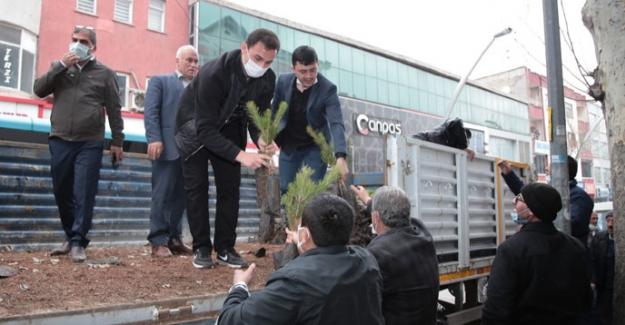 AK Parti Elbistan'da 17 bin fidan dağıttı