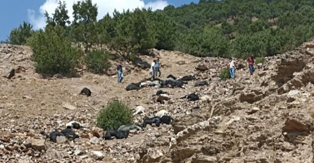 Yıldırım düşmesi sonucu 45 keçi telef oldu