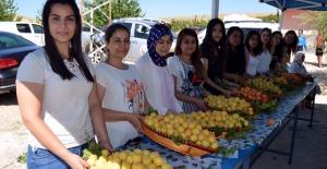 Elbistan'da kayısı hasat günü etkinliği