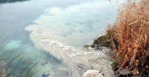 Ceyhan Nehri'nde balık ölümü