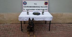Narkotik köpeği ile uyuşturucu operasyonu