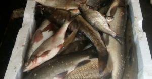 Kaçak balık ticaretine 15 bin lira ceza
