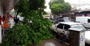 Aşırı yağış ve rüzgar ağaç devirdi
