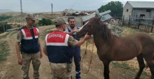 Jandarma At hırsızını yakaladı