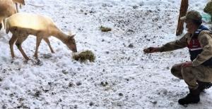 Jandarma ekipleri geyikleri eliyle besledi