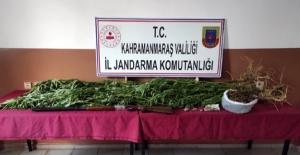 Jandarma 3 ilçede uyuşturucu operasyonu düzenledi