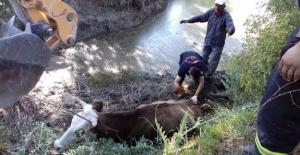 Çamura gömülen ineği itfaiye kurtardı