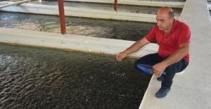 Elbistan'da yılda 3 milyon alabalık yavrusu üretiliyor