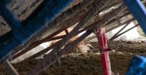Elbistan'da ağıl çatısı çöktü 5 koyun telef oldu 15'i de yaralandı