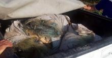 Kaçak balık avına ceza