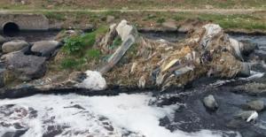 Kirlenen sudan hayvanlar su içtiği zaman ölüyor iddiası